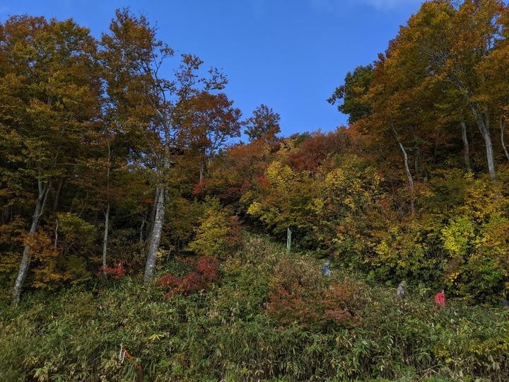 1025八海山の紅葉