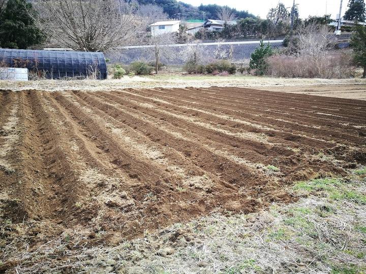 0318ジャガイモ畑2