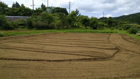 0607サツマイモ畑.jpg