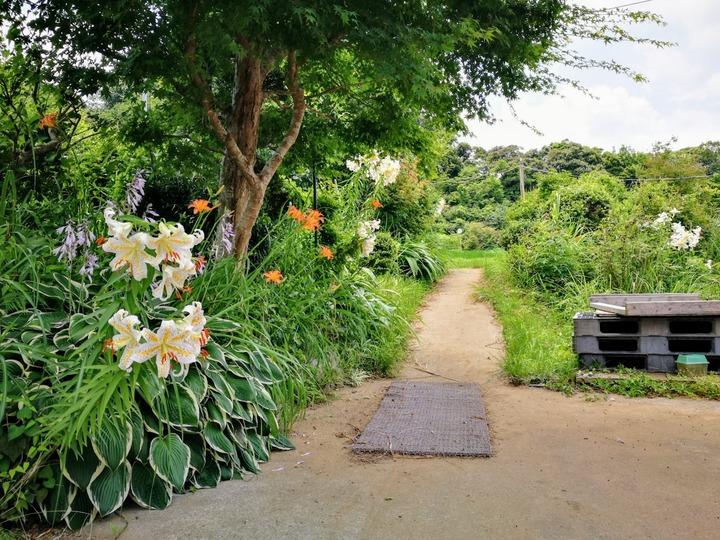 0722初夏の花
