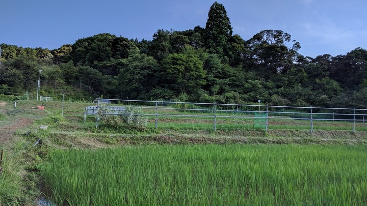 0706草刈り