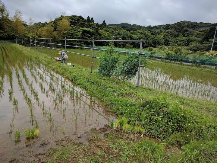 0614豆畑1