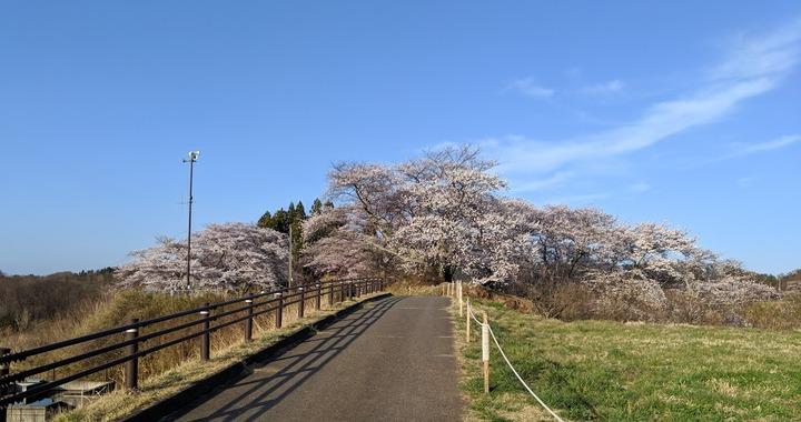 0418滝桜周辺6
