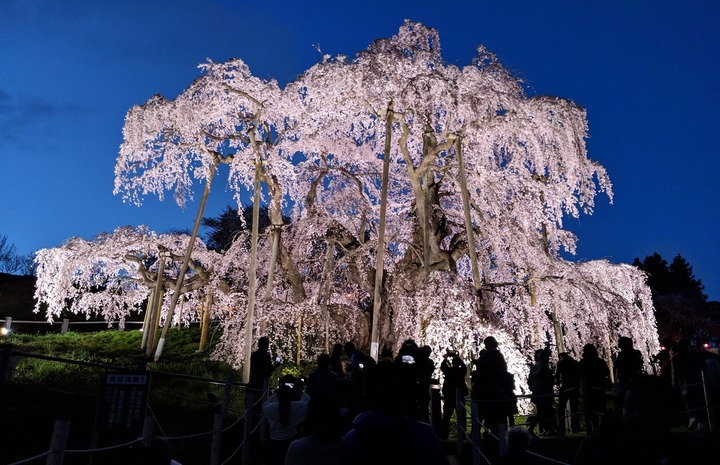 0418滝桜夜1