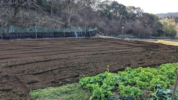 0221ジャガイモ畑