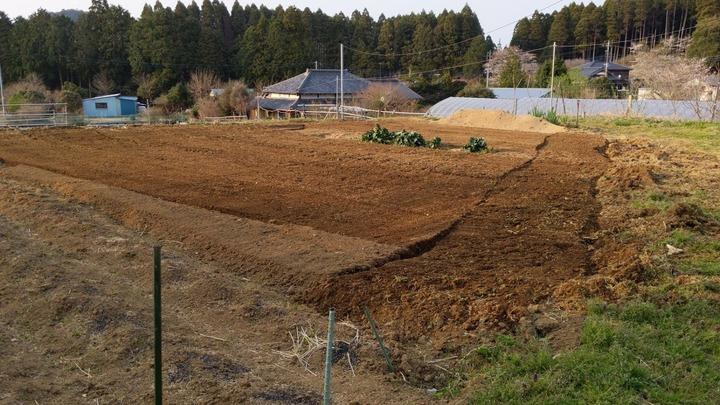0408上のサトイモ畑