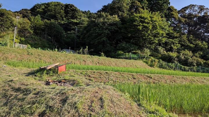 0706草刈り2