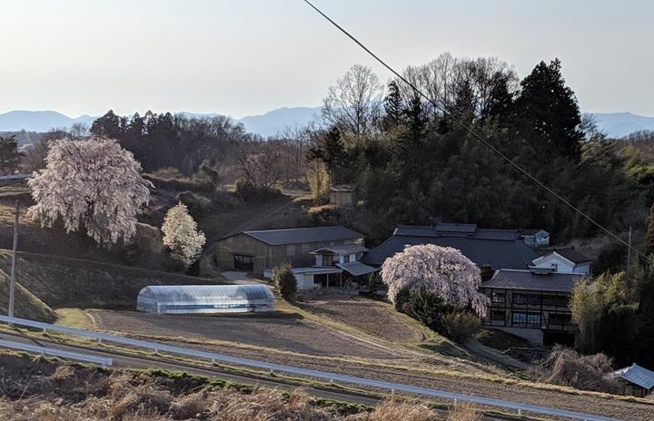 0418滝桜周辺4