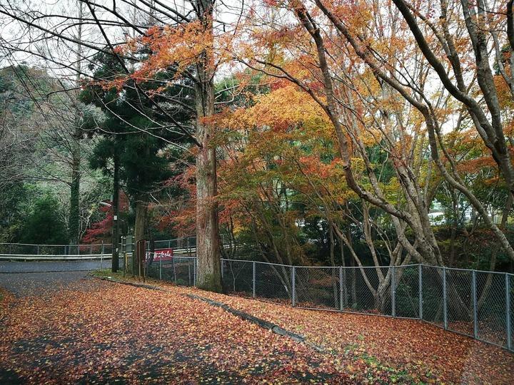 1222内浦山の遅い紅葉
