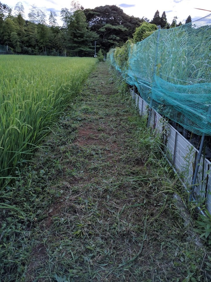 0803草刈り3.jpg