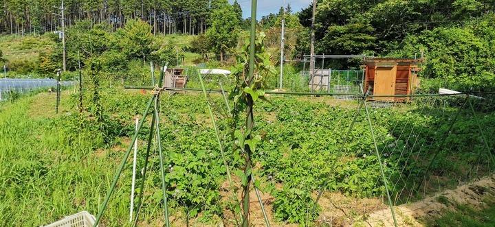 0608芋畑