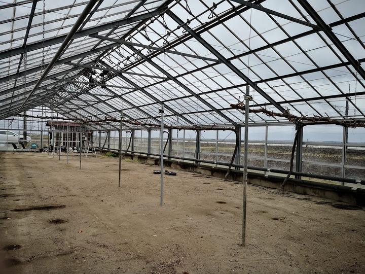 0307ブドウ温室1