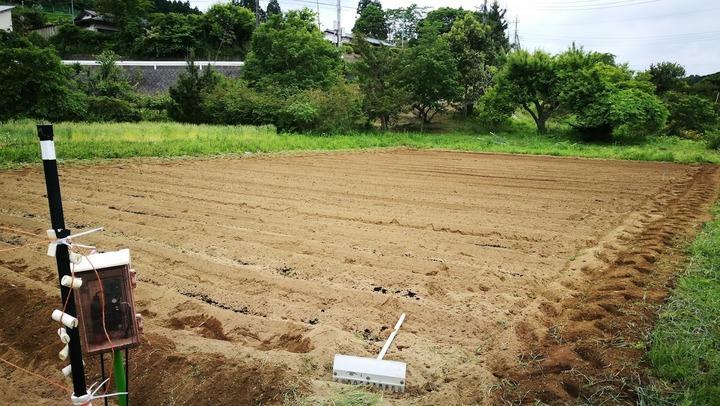 0525サツマイモ畑準備