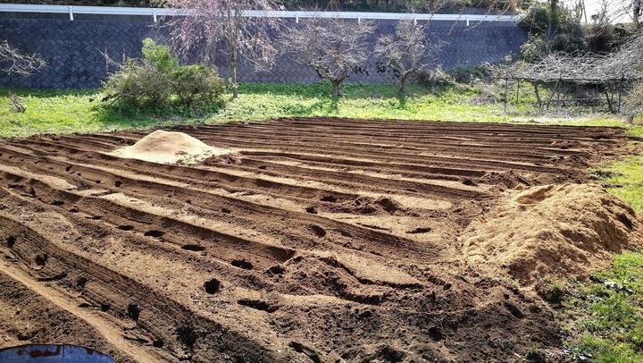 0417サトイモ畑2