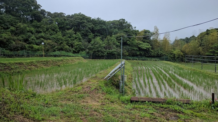 0621雨の田んぼ