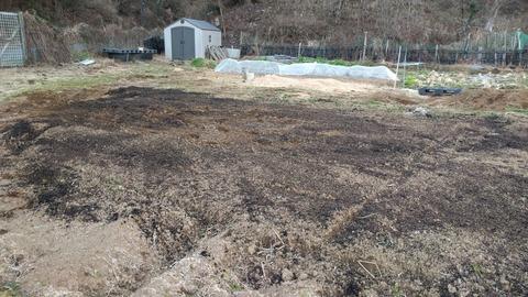 0128うちの畑に燻炭.jpg