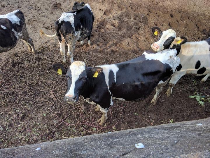 1028牛のご飯2