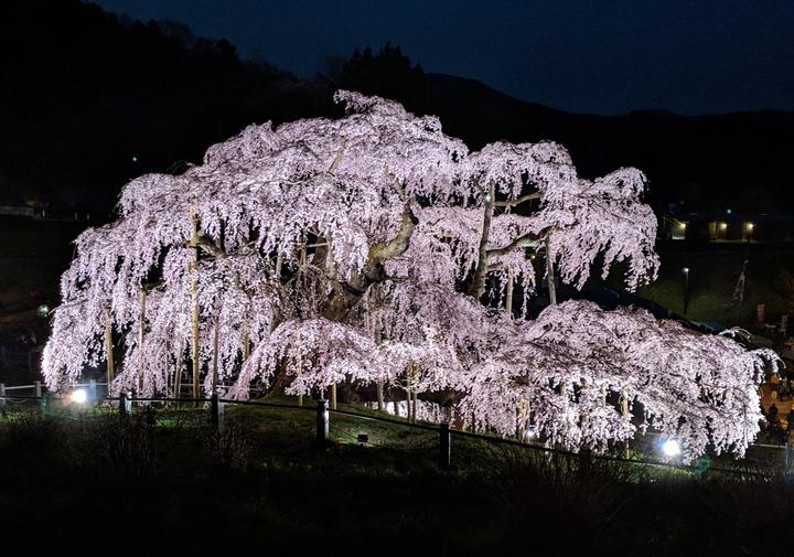 0418滝桜夜5