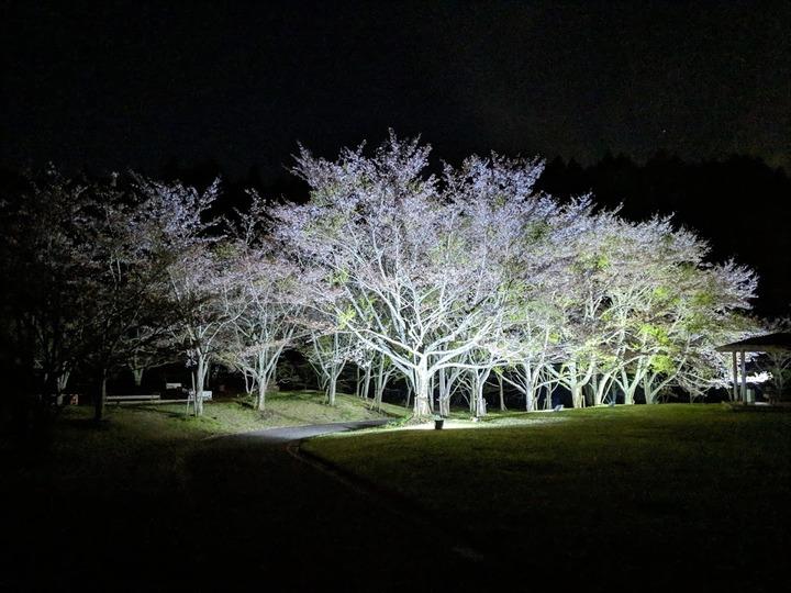 0416草川原公園の桜