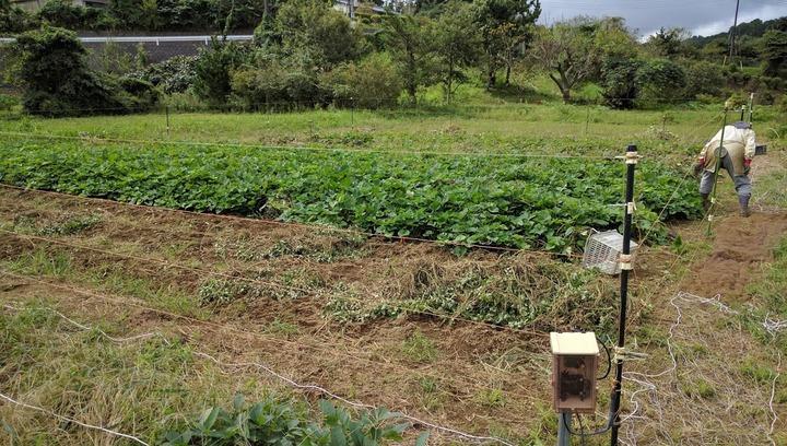0928芋畑1