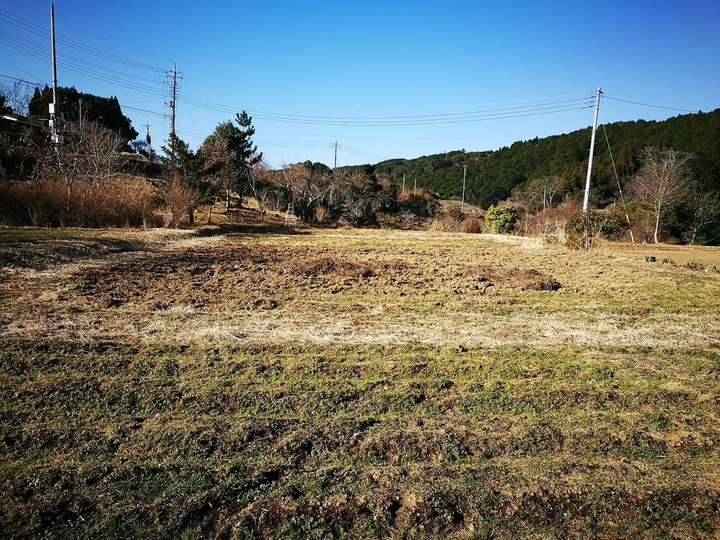 0104芋畑