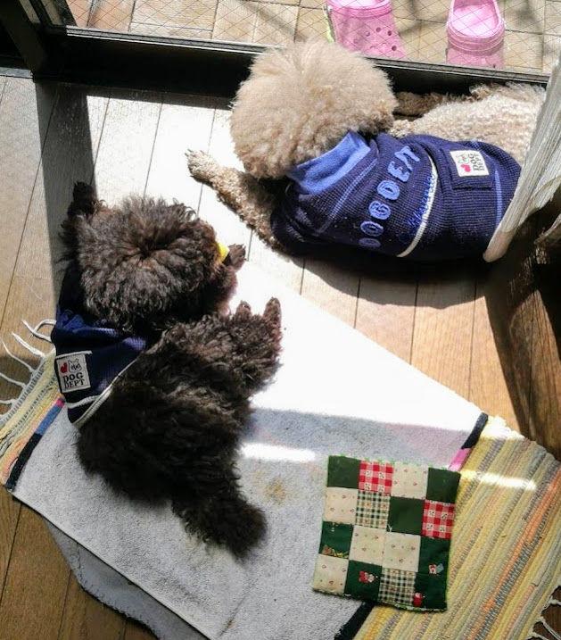 0416親子で昼寝 (1)