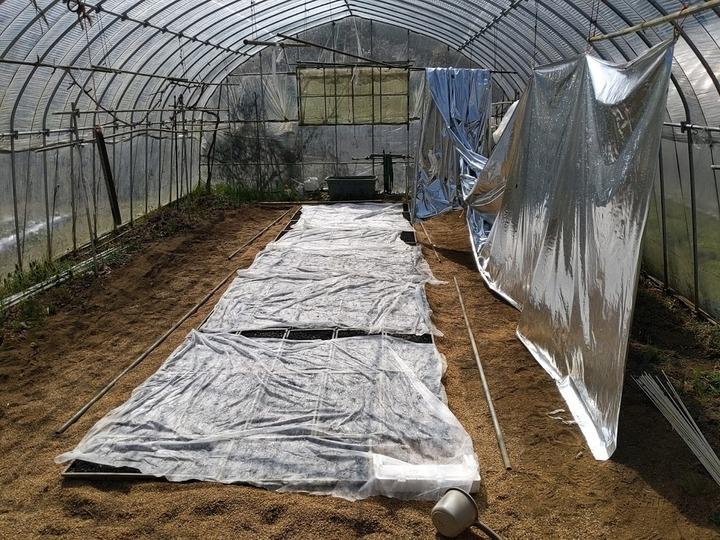 0406ハウスの苗作り