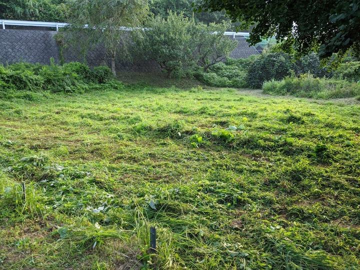 0808旧サトイモ畑