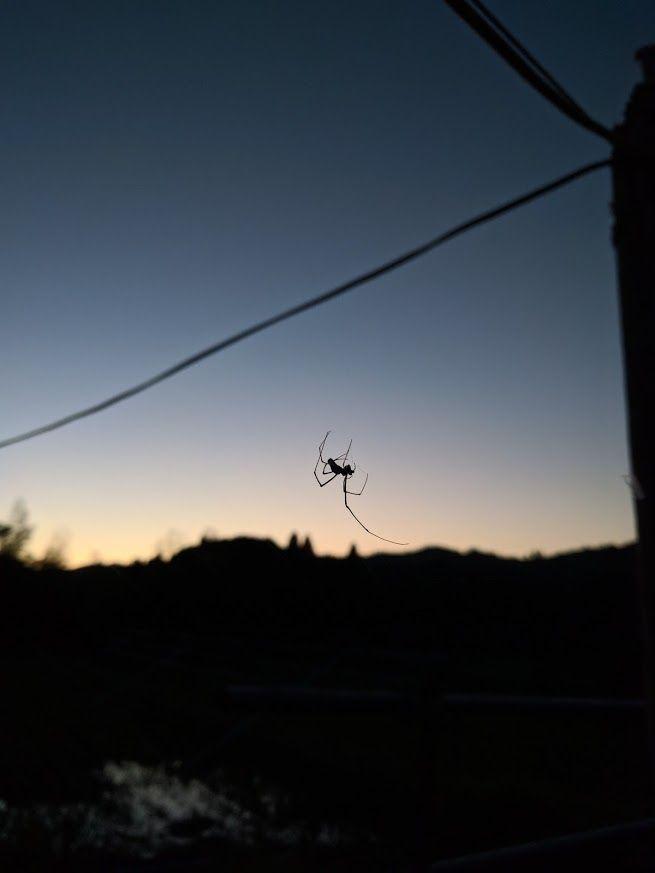 0929蜘蛛