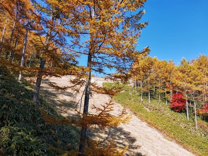 1031富士見高原の秋
