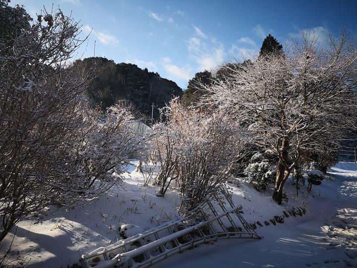 0123雪景色1