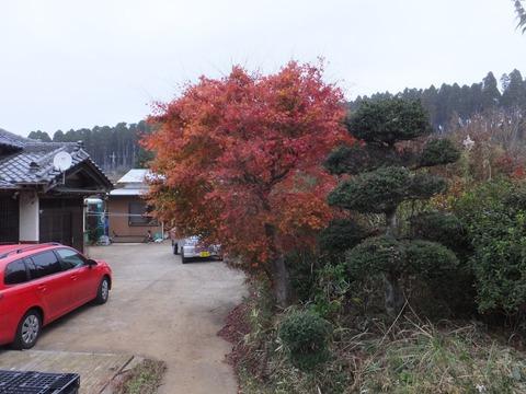 1203庭の紅葉.JPG