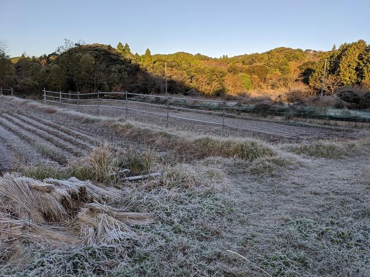 1130初霜