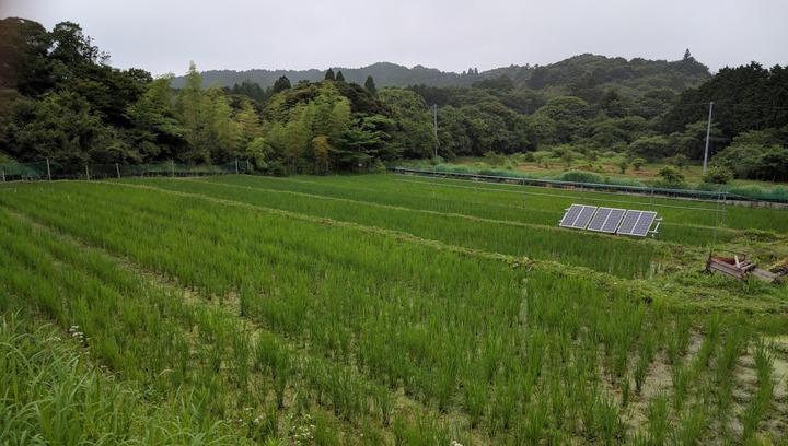 0701去年の田んぼ2