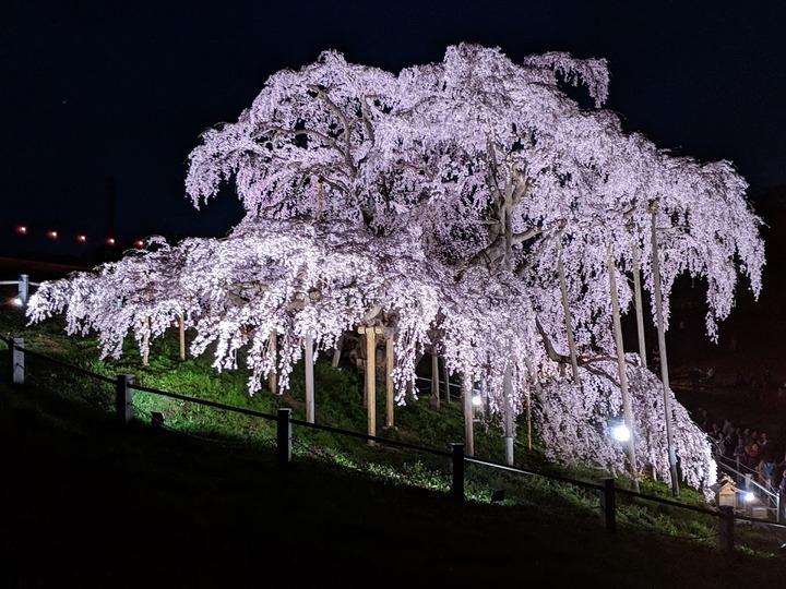 0418滝桜夜4