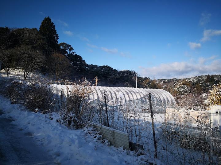 0123雪景色4