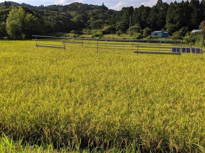 0109収穫