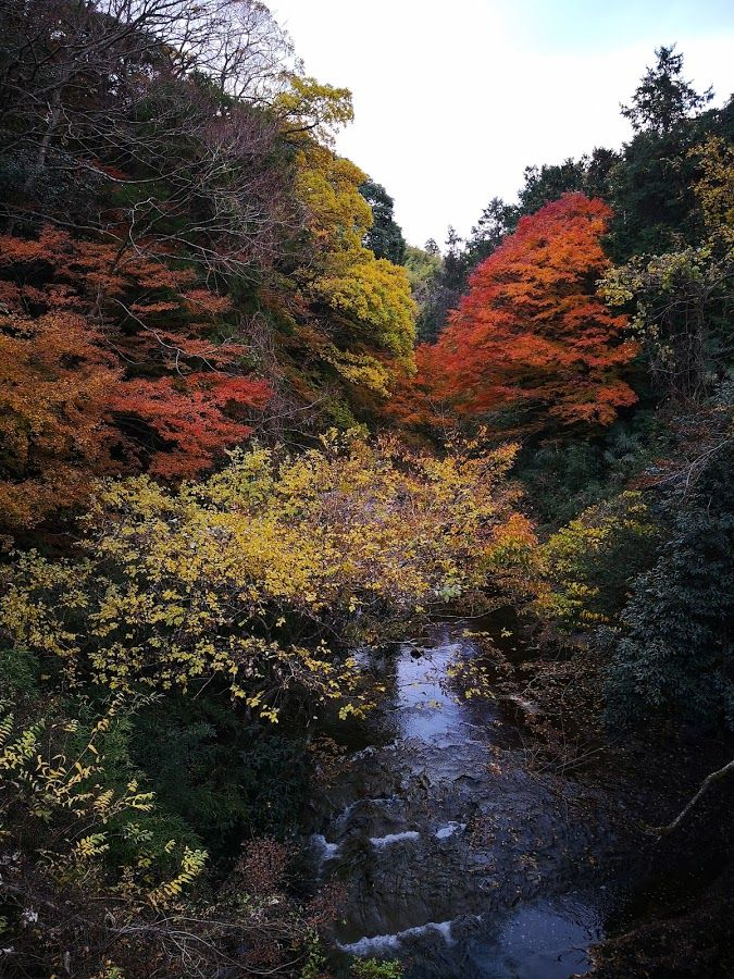 1202夷隅川支流の紅葉