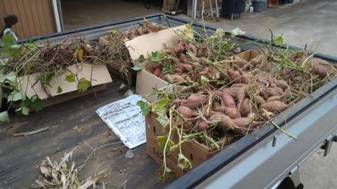 1015午後の収穫.jpg