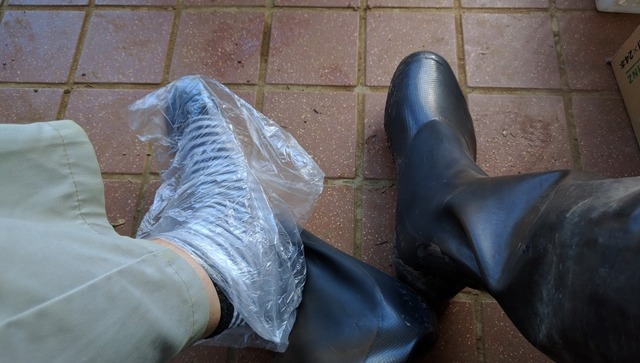 0618田植え靴.jpg