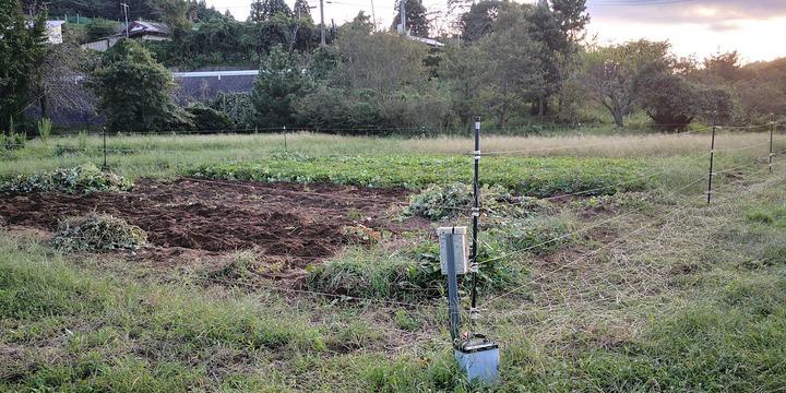 0928芋畑