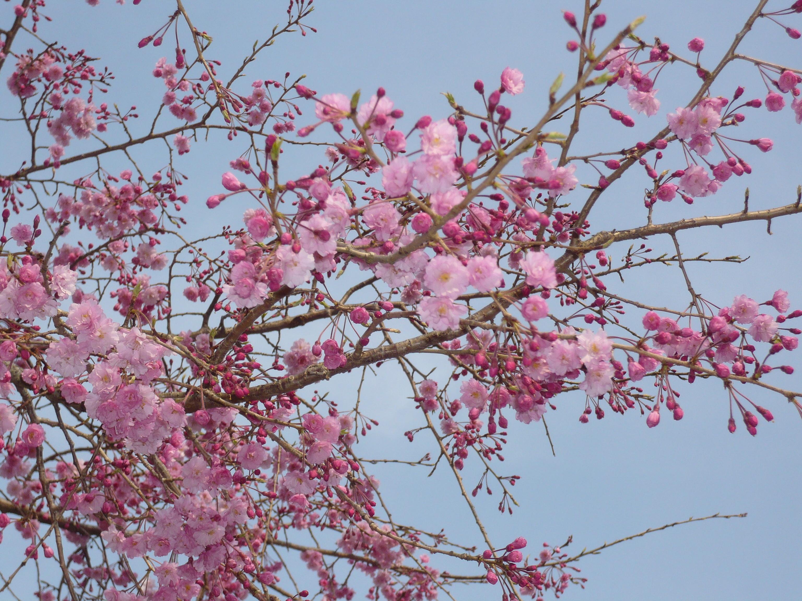 http://livedoor.blogimg.jp/kaiteki_kan/imgs/2/b/2bb4f514.JPG