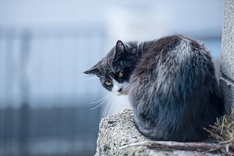 ブログ用 振り返り睨む猫