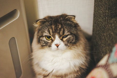 ブログ用 猫片目