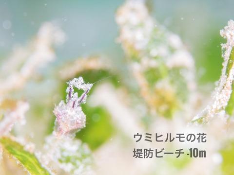 IMG_2474