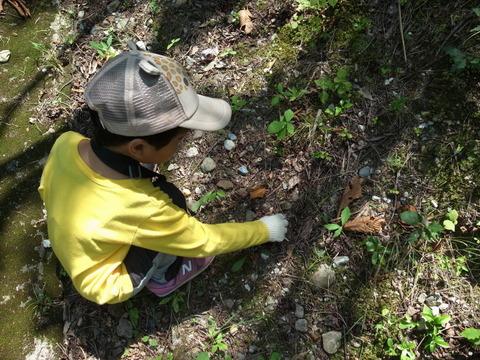 【もりの学舎】ちびっこ自然体験イベント