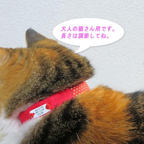 猫首輪0027