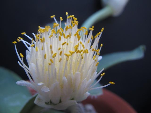 白いのが花弁と書いて雄蕊6本雌蕊1本などと書いているところ