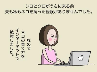シロとクロがうちに来る前、夫も私もネコを飼った経験がありませんでした。なのでネコの育て方をインターネットで勉強しました。