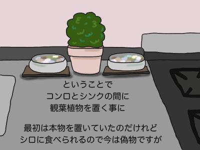ということでコンロと深紅の間に観葉植物を置く事に 最初は本物を置いていたのだけれど、シロに食べられるので今は偽物ですが